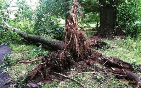 Потужний ураган у Москві повалив дерева та пошкодив машини