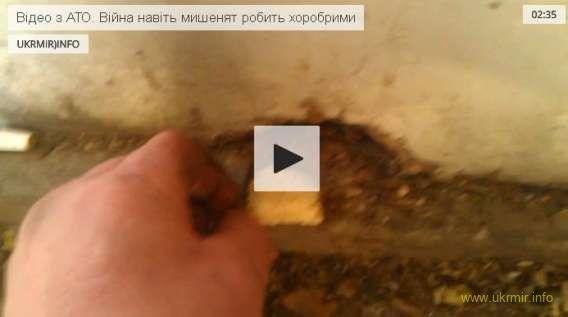 Відео з АТО. Війна навіть мишенят робить хоробрими