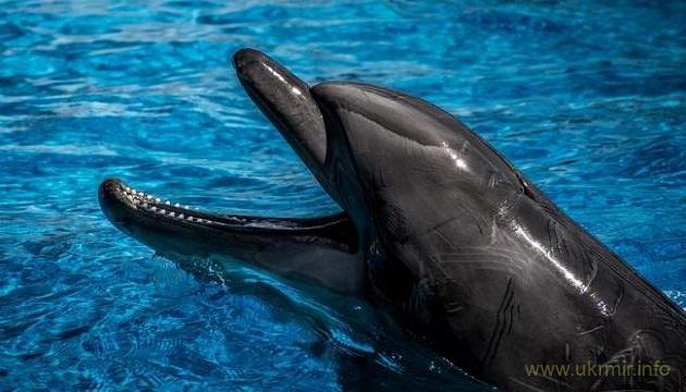 В реке Днепр появились дельфины