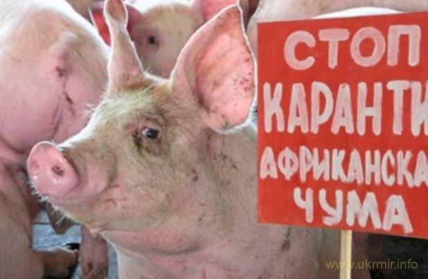 В Петербурге в продаже появились сосиски зараженные вирусом АЧС