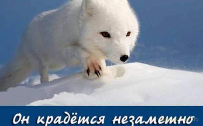 Мировой бизнес объявил бойкот российским акциям