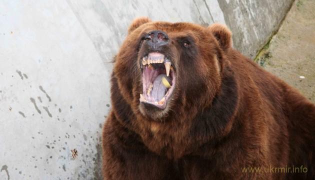 Сбежавший из зоопарка медведь съел пенсионера