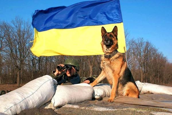 З Новим, 2018-м роком, українці! (Синьо)-жовтий Пес допоможе нам розчавити Московію