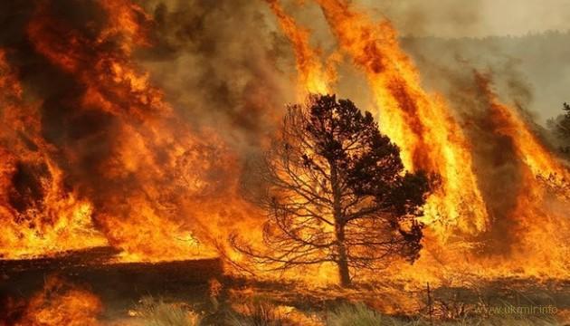 На России горит около 170 тыс. га лесных земель