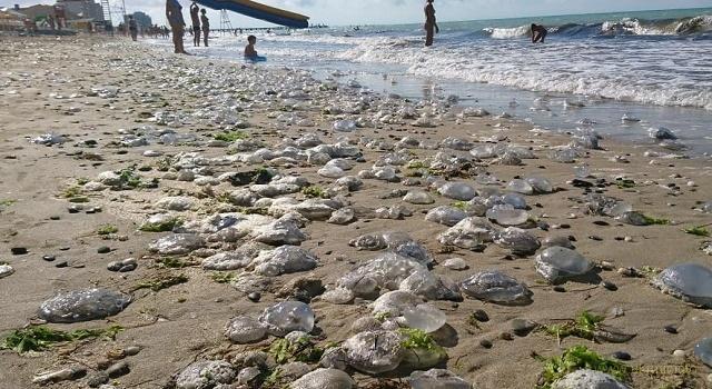В оккуппированом Крыму «нашествие» жутких медуз