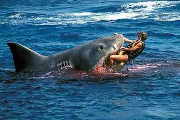 Акула пожирающая сама себя