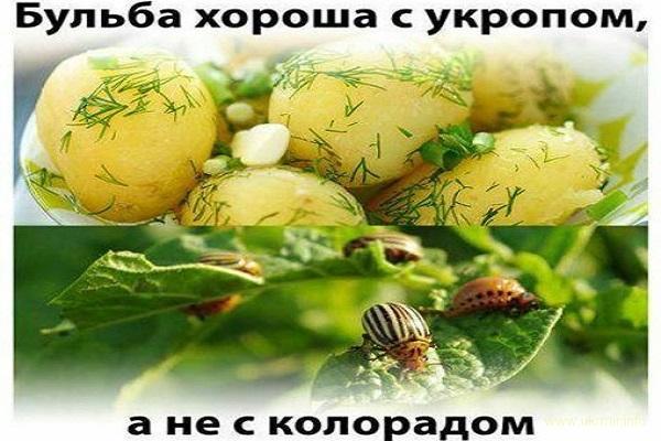 В Минске бесплатно учат украинскому языку