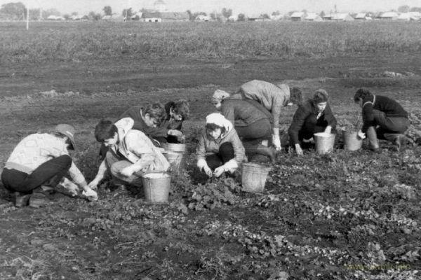 Миф про «натуральные советские продукты»
