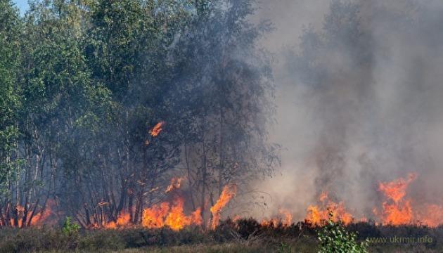 Очень скоро на России выгорит весь промысловый лес