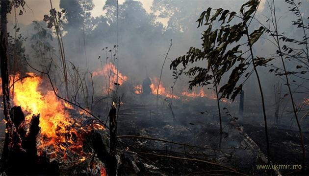 России грозят пожары и нехватка продовольствия из-за отсутствия снега