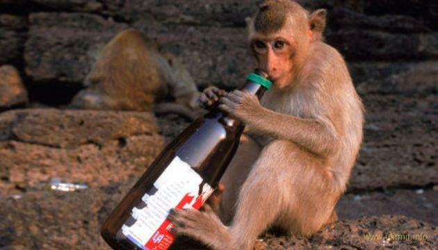 Антропологи рассказали как алкоголь спас популяцию Homo Sapiens