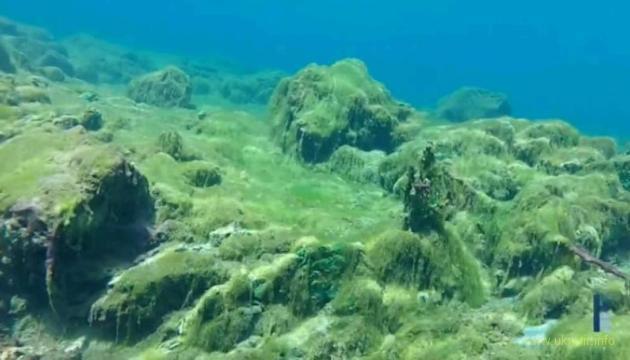 Жителям Поморья могут разрешить сбор водорослей после шторма