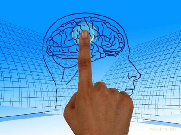 Вчені: Мозок отримує 90% інформації з кишківника