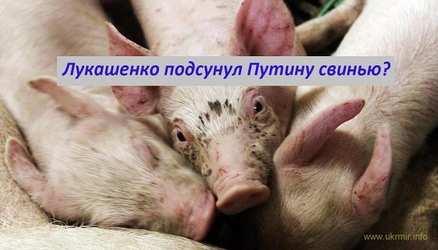 Лукашенко подсунул Путину свинью?